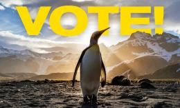 "Image of penguin with words ""VOTE"" in background for news story on Penguin Chats"