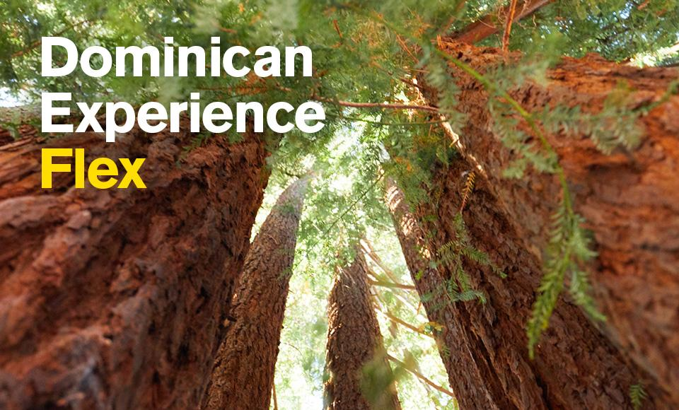 redwood trees image with text dominican experience flex